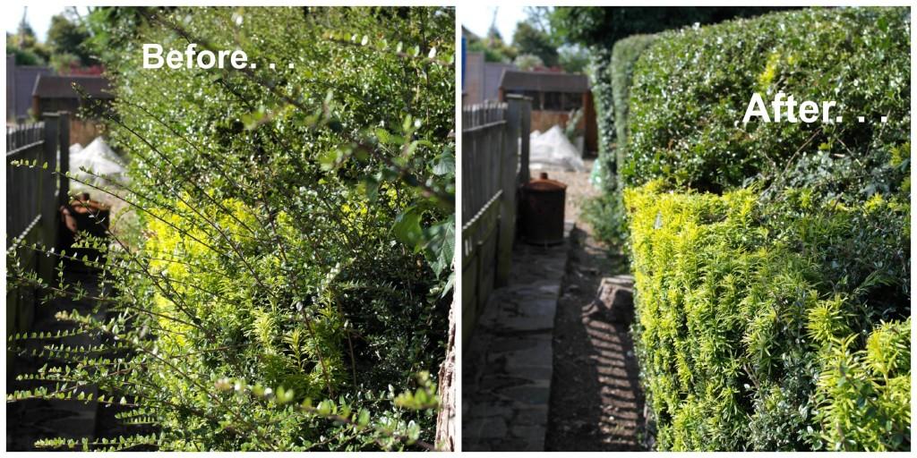 Garden, gardening, Fantastic Services, home maintenance