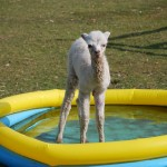 The simple beauty of the paddling pool