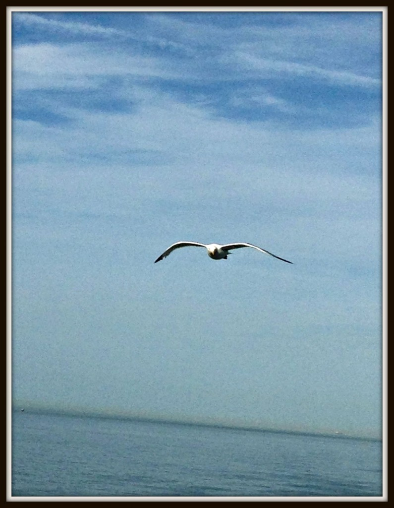 photography, blogging, seagull, Calais, ferry crossing