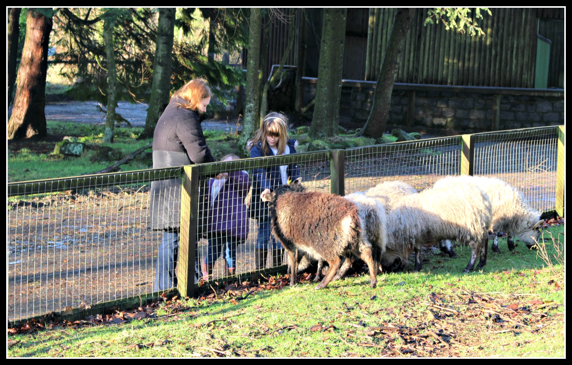 Palacerigg COuntry Park, days out with children, Scotland, North Lanarkshire