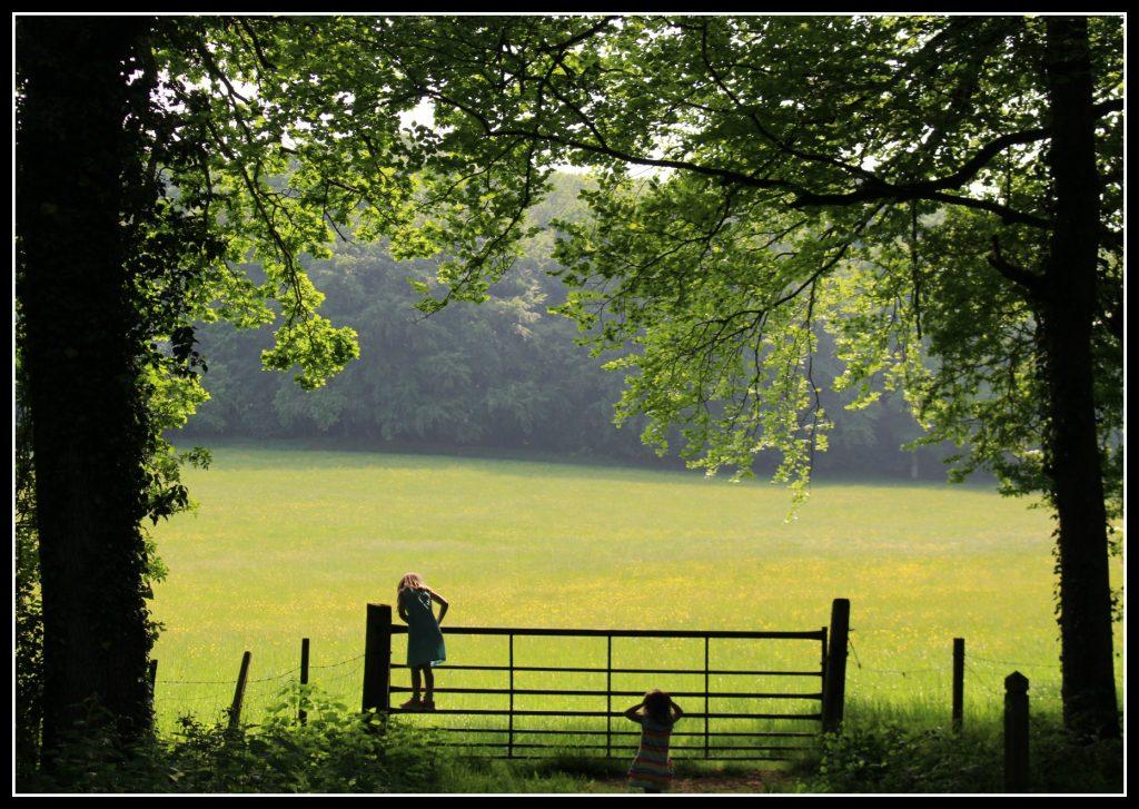 childhood, children, fun, days out, forest, field, woodland, photography, blogging, #MySundayPhoto