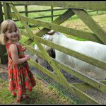 A walk in the sunshine featuring goats, llamas and sheep