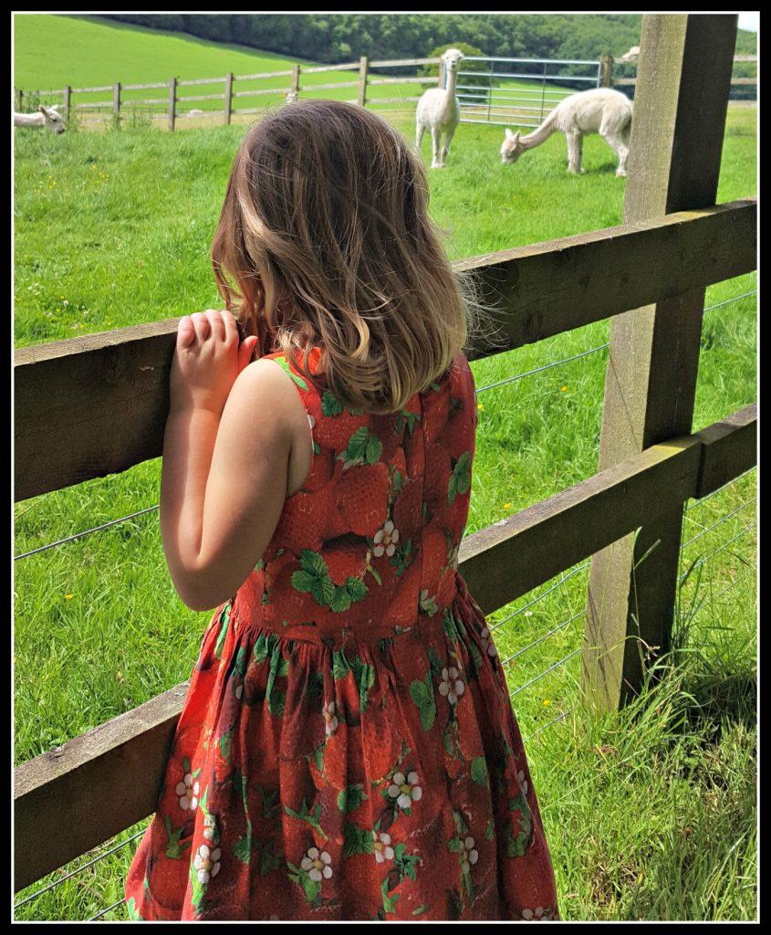 llamas, llama, walk, active children, walk, walking, healthy children, active children