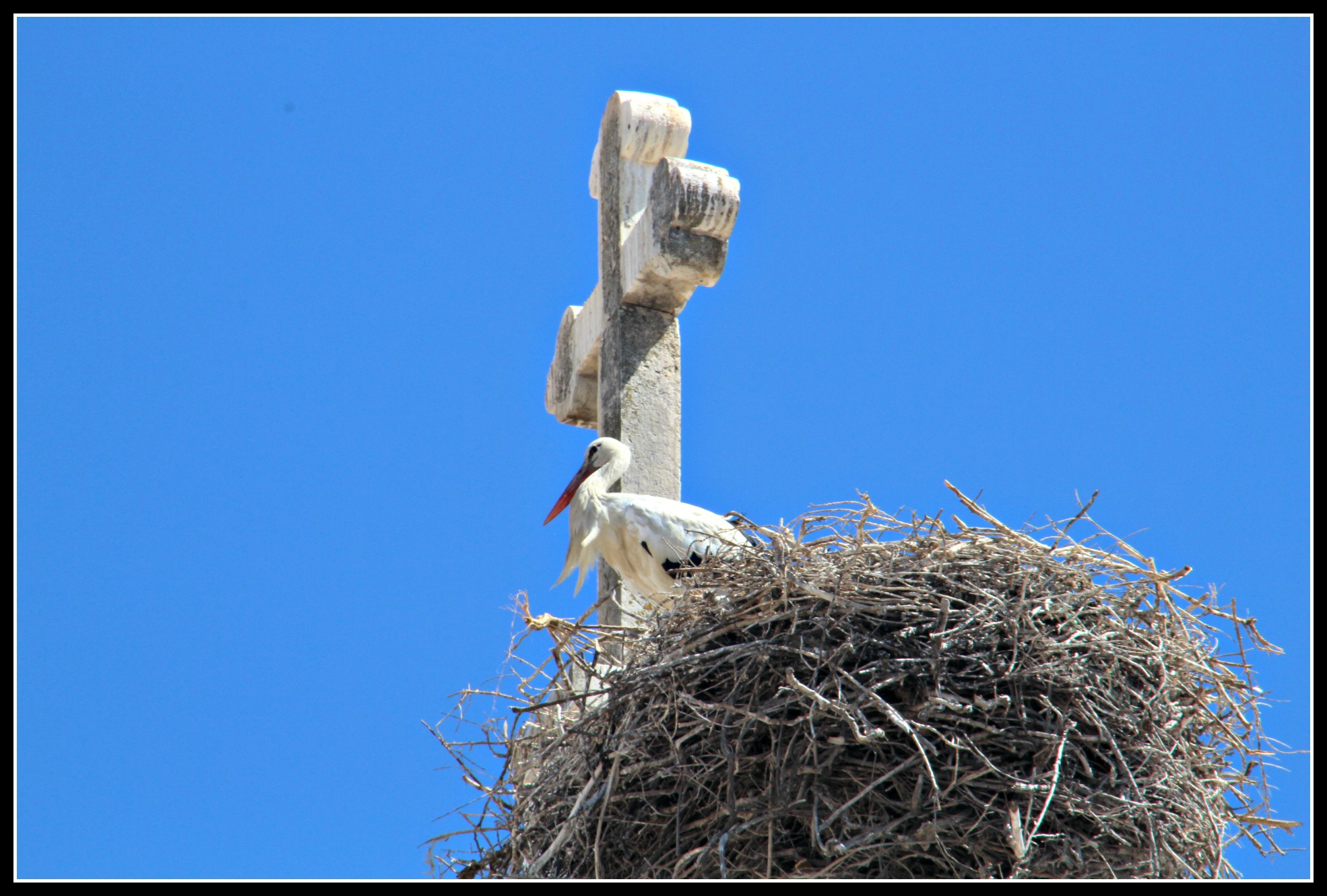 If you're going to build your nest anywhere…