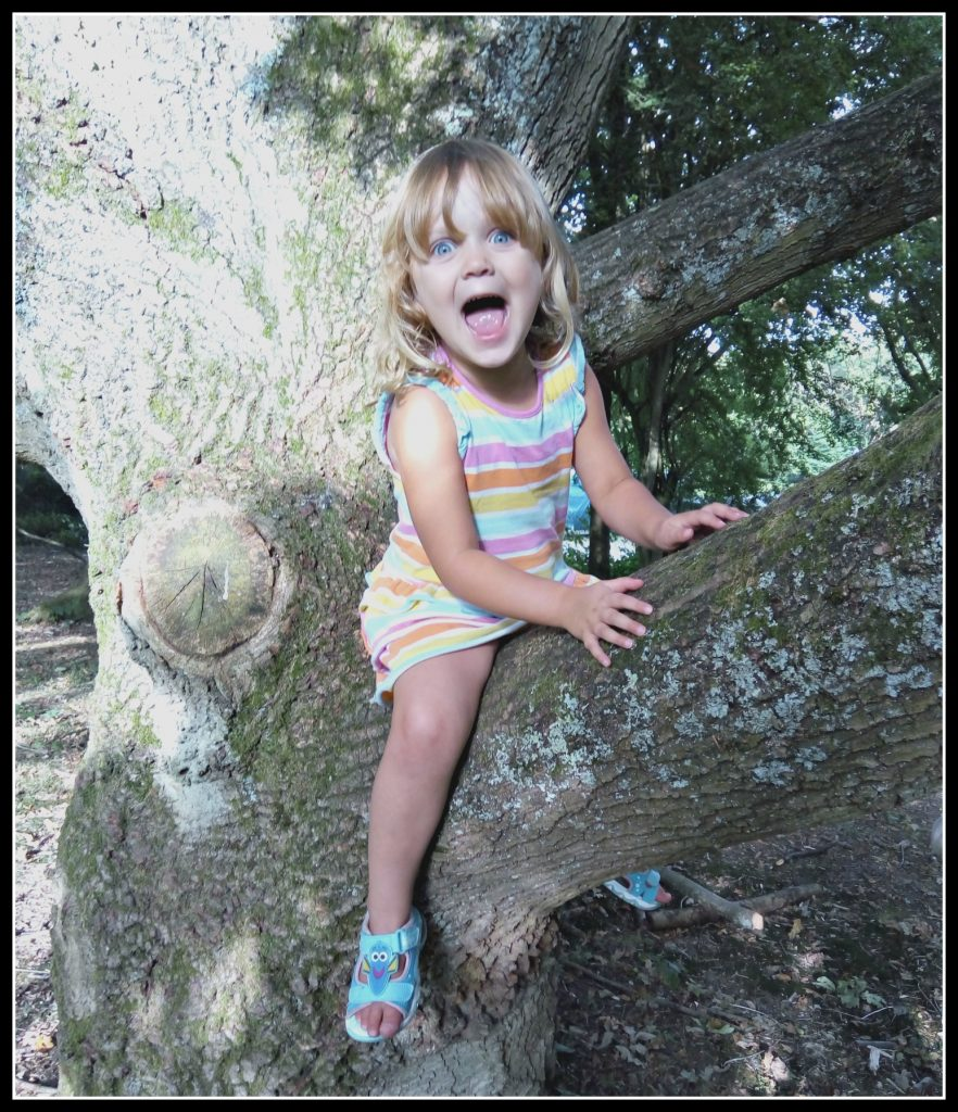 tree, climb trees, camping, camp site, outdoor play, ousitde play, active children, healthy children