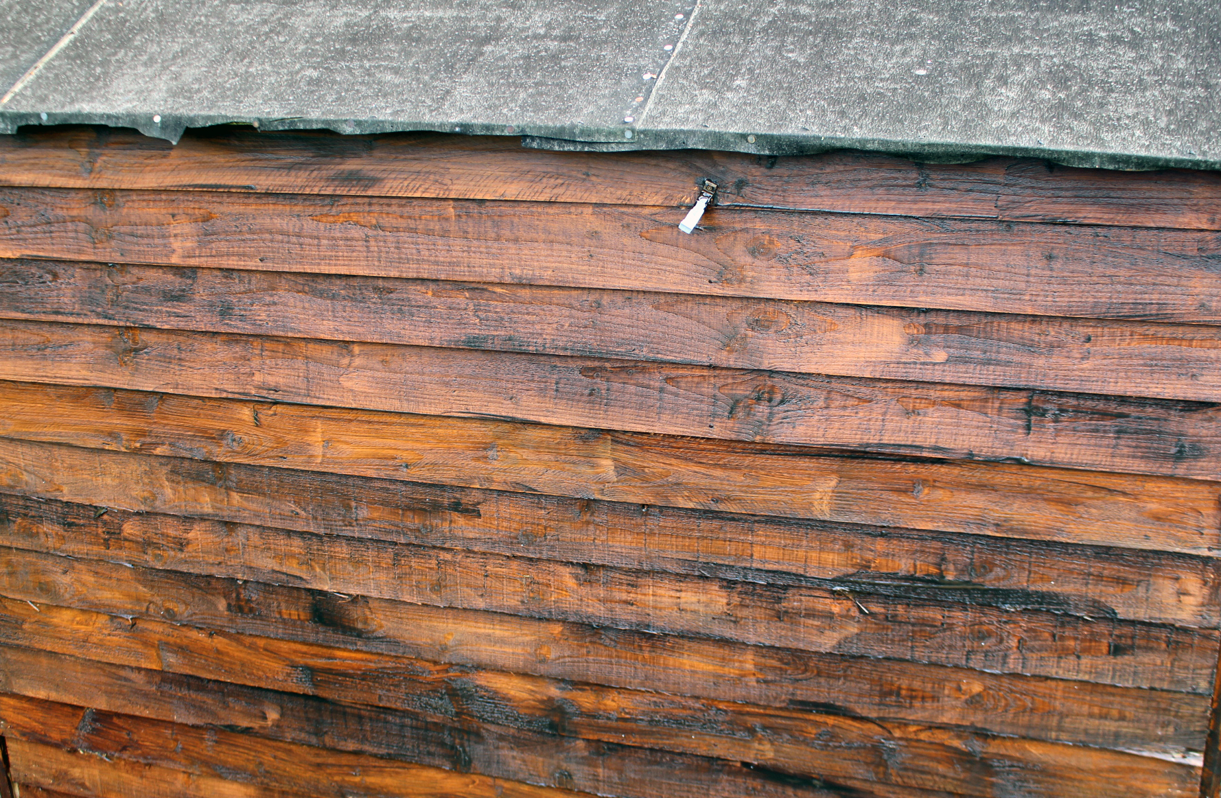 Giving the garden shed some love with Sadolin wood stain
