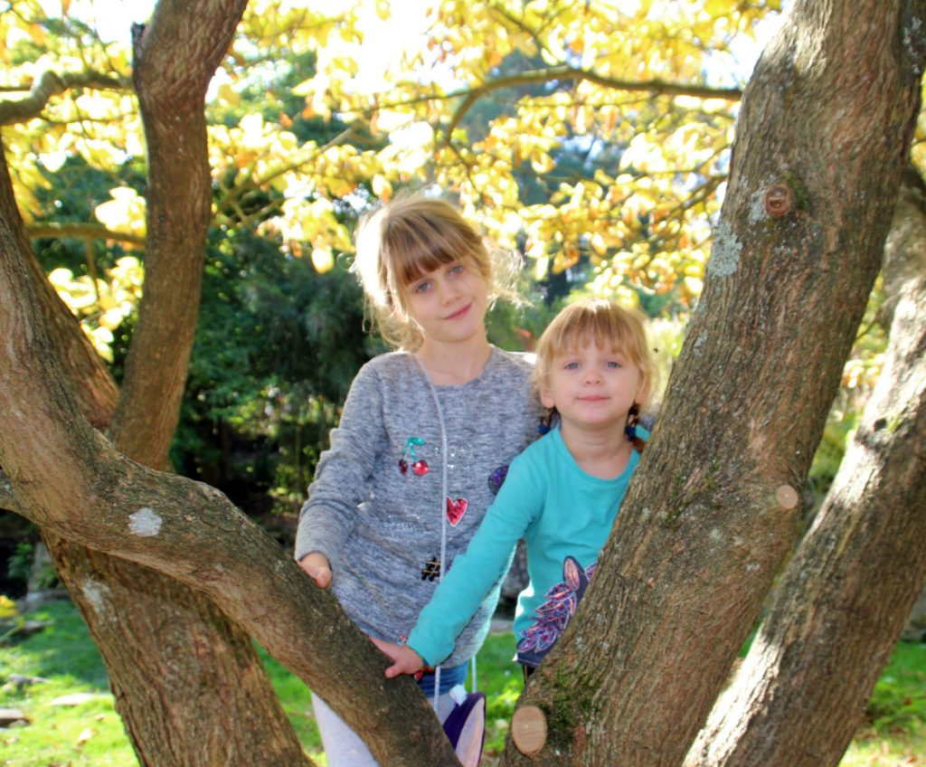 photography, blogging, climbing trees, active children, tree climbing, playing outdoors,