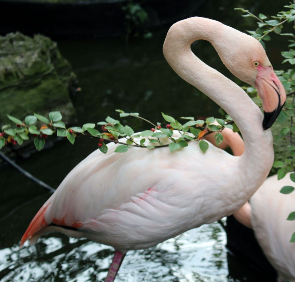 #SEhidden Gems, Kensington Roof Gardens, flamingo, London
