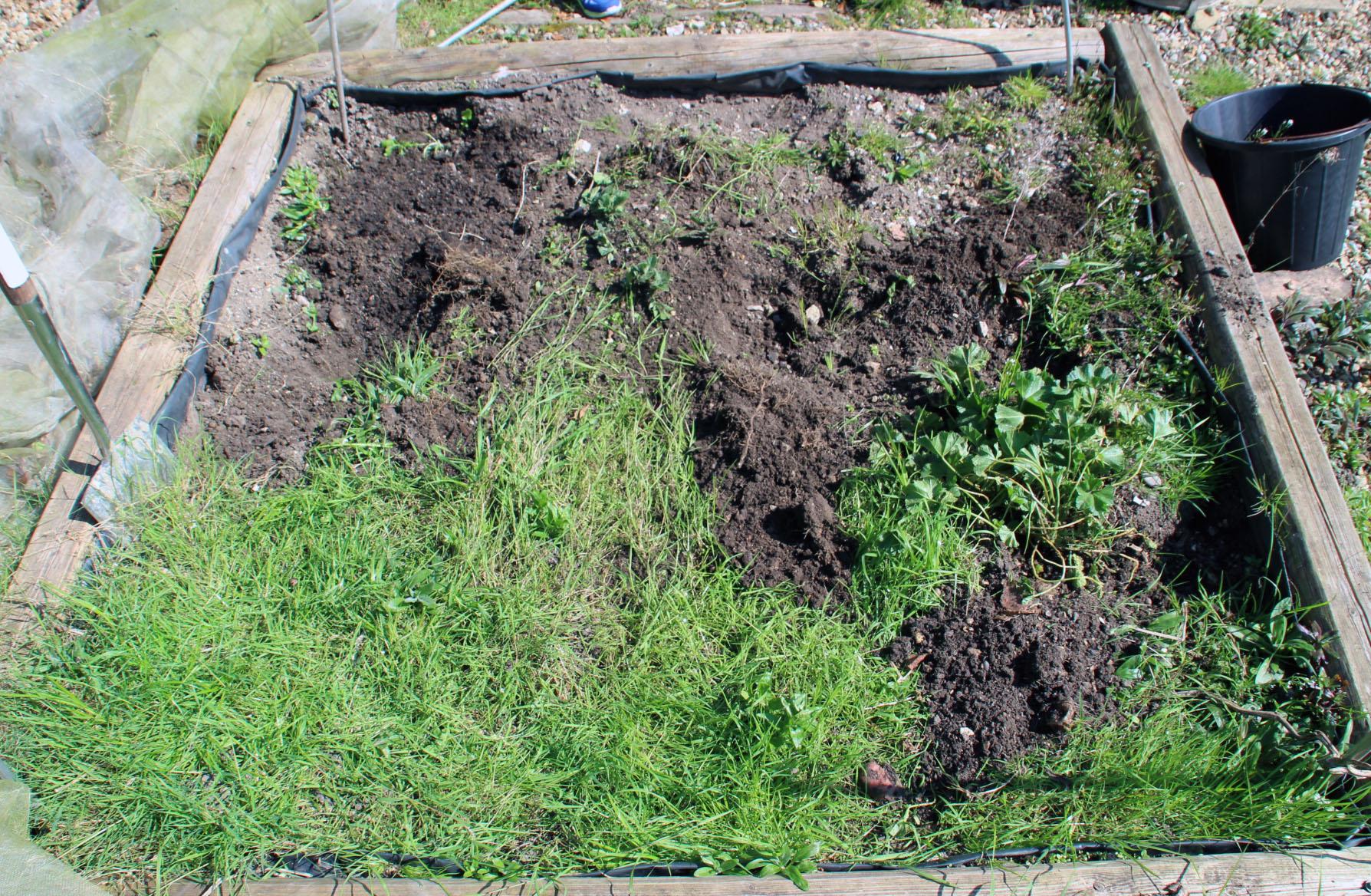 vegetable patch, gardening, gardening for children, dadbloguk, dadbloguk.com