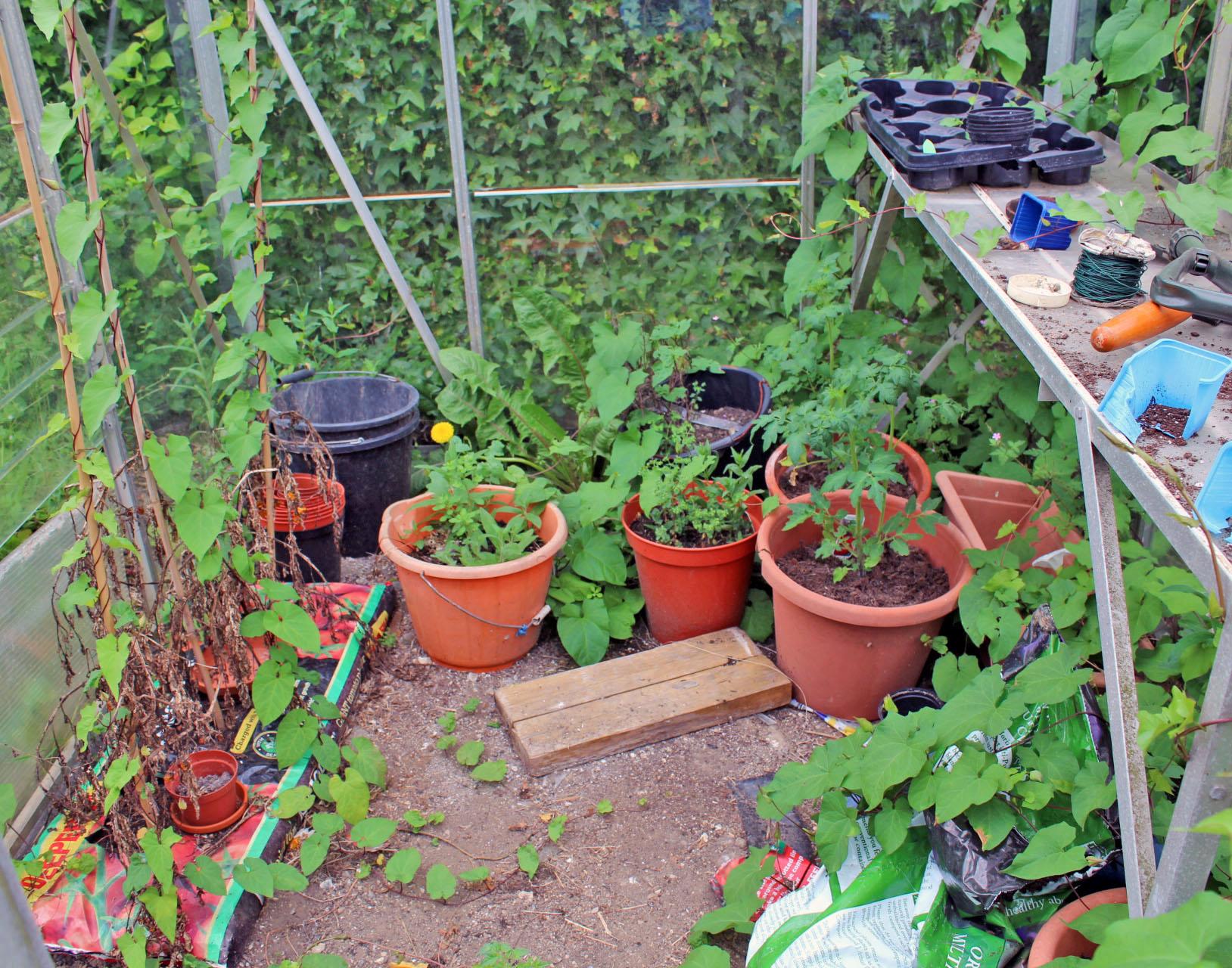 gardening, gardening with children, dad blog uk, dadbloguk.com, school run dad