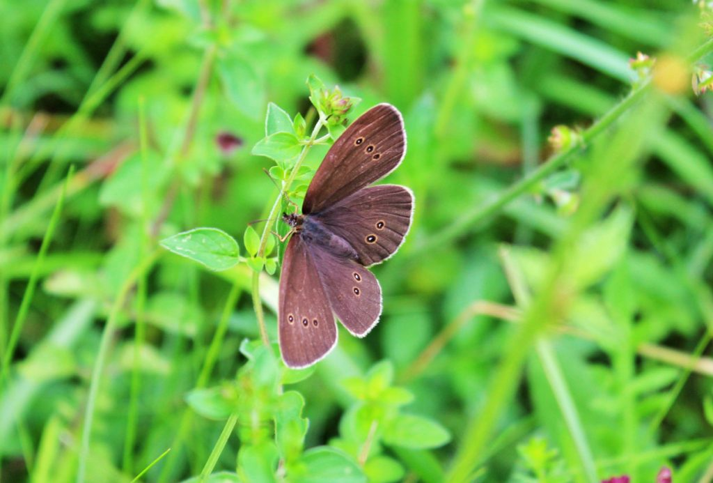 butterfly, butterfly photography, #MySundayPhoto, dad blog uk, dadbloguk, dadbloguk.com, school run dad