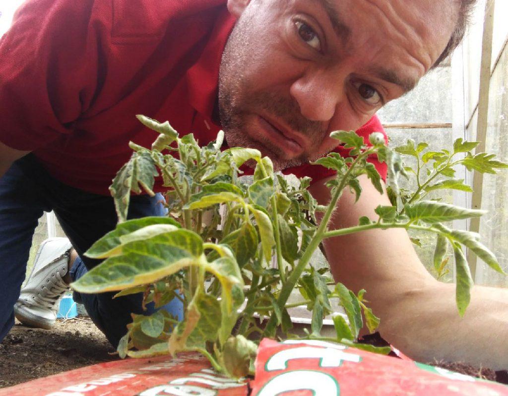 gardening with children, gardening for kids, gardening, tomato plants, grow bag, gro bag, dadbloguk, dad blog uk, dadbloguk.com, school run dad