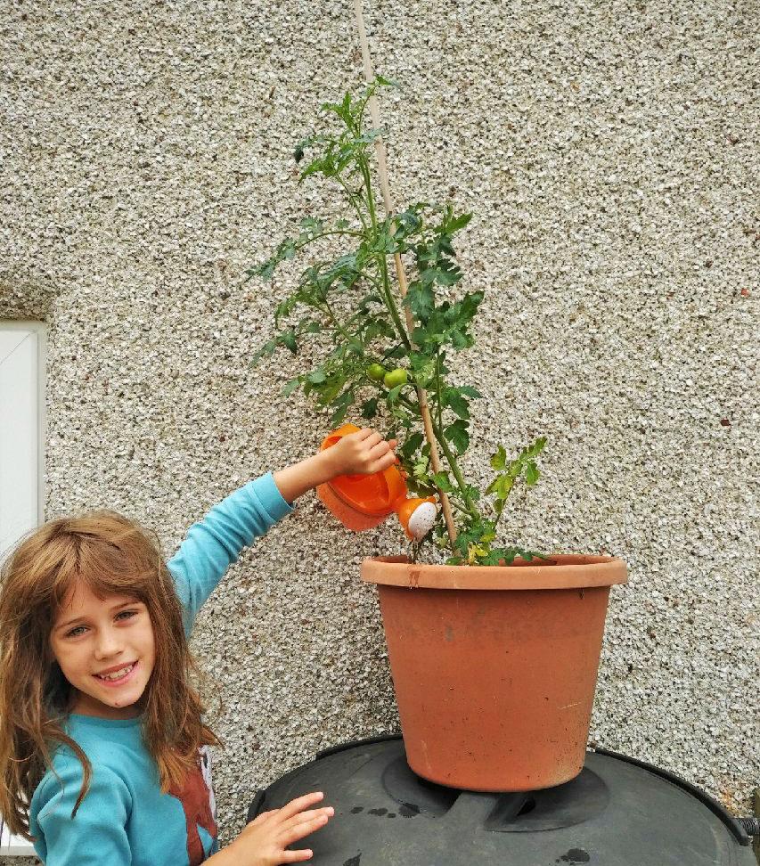 gardening, gardening with kids, gardening with children, growing tomatoes, dad blog uk, dadbloguk, dadbloguk.com, school run dad