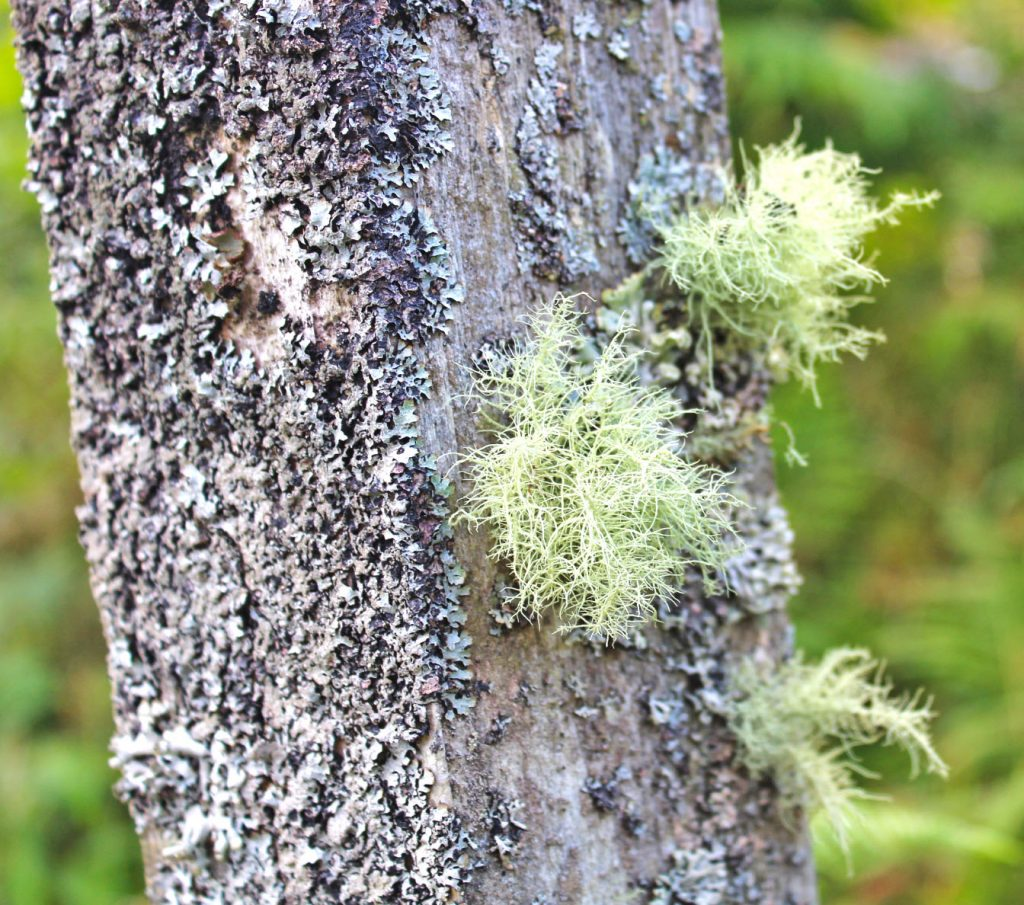 Photography, lichen, moss, West Scotland, dadbloguk, dadbloguk.com, dadbloguk, stay at home dad, school run dad, holidays, holiday