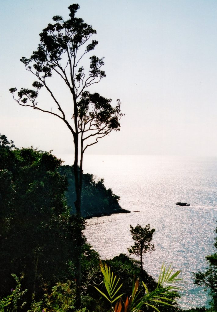 rainforest, conservation, jungle, dadbloguk, dadbloguk.com, dad blog uk, school run dad, stay at home dad, Malaysia, Pangkor Laut, Malaysia
