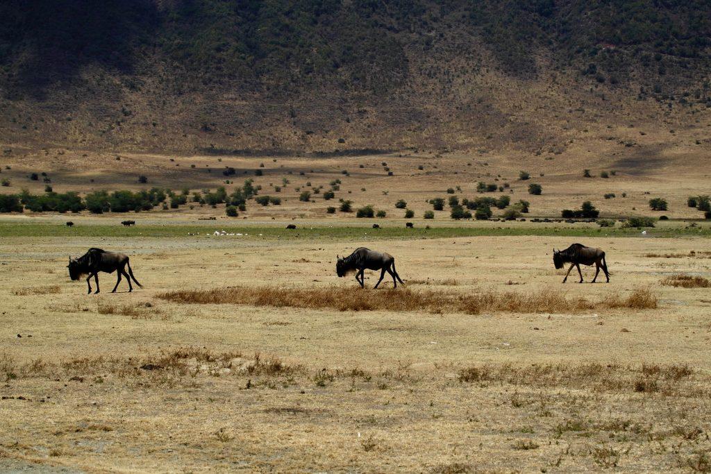 Tanzania, African Safari, Tanzania Safari