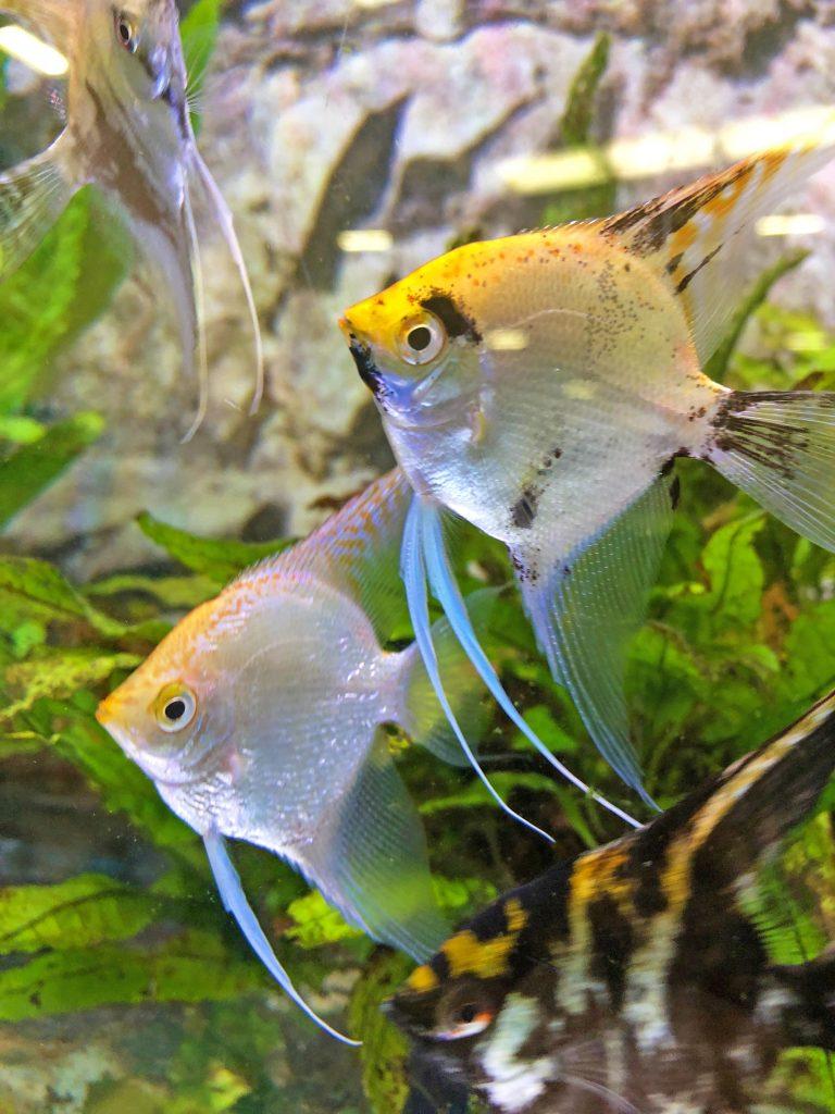 My Pet Pals, #mypetpals. Pets At Home, dadbloguk, dadbloguk.com, dad blog uk