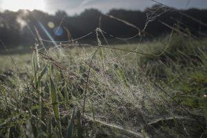 socweb, spider web, spider's web, sunrise, early morning,, dadbloguk, dadbloguk.com, school run dad, photography, sun flare, mysundayphoto