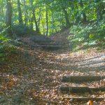 A woodland scene