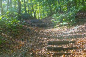woodland scene, woodland, woodland scene photograph, dadbloguk, #mysundayphoto, Pgotalife, half-term, half term, Leigh Hill, Leith Hill Tower, Dorking, National trust, uk dad blogger, photography