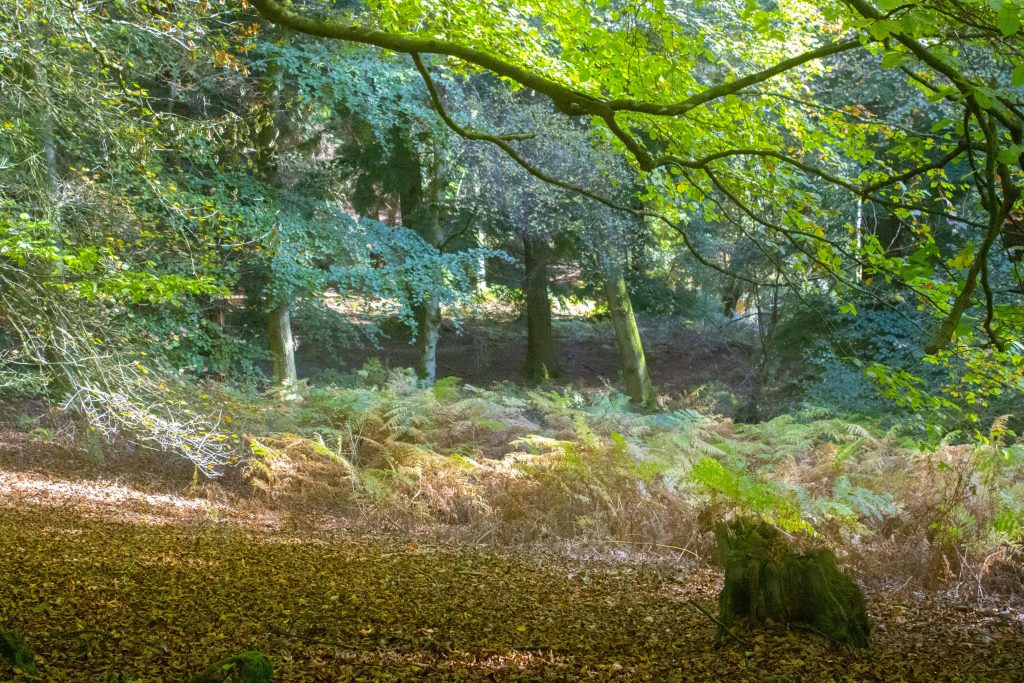 autumn, fall, autumn 2018, fall 2018, autumn colours, woodland, woodland scene, dadbloguk, photographer, bloggr, uk dad blogger
