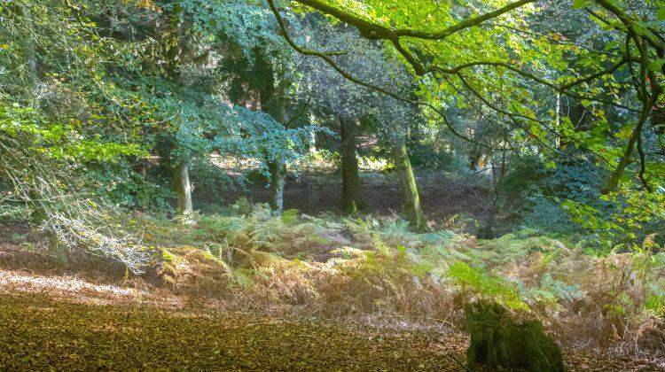 autumn, fall, autumn 2018, fall 2018, autumn colours, woodland, woodland scene, dadbloguk, photographer, bloggr, uk dad blogger