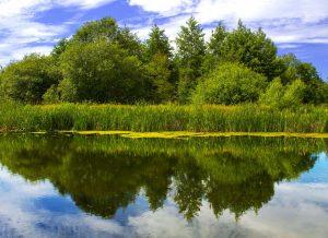 reflections, reflection reflection in water, photography, dad blog, dadbloguk, photo editing