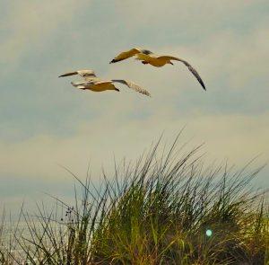 ornithology, birdwatching, birdsong, bird song