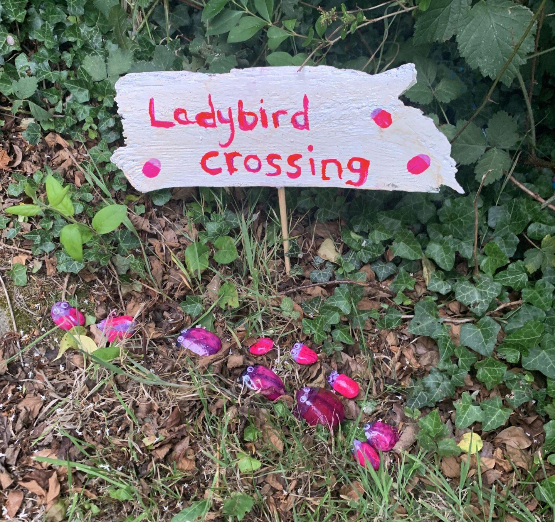ladybird crossing, ladybird, ladubirds