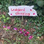Ladybird crossing!