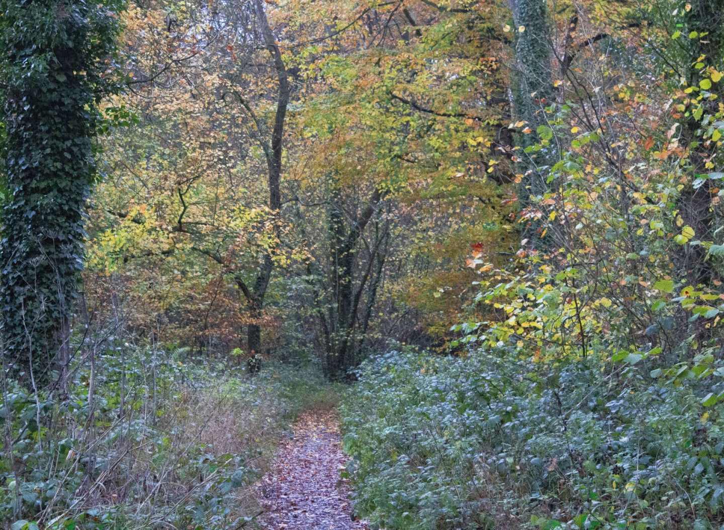autumn colours on display in a forest
