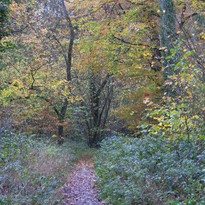 Autumn colours on display