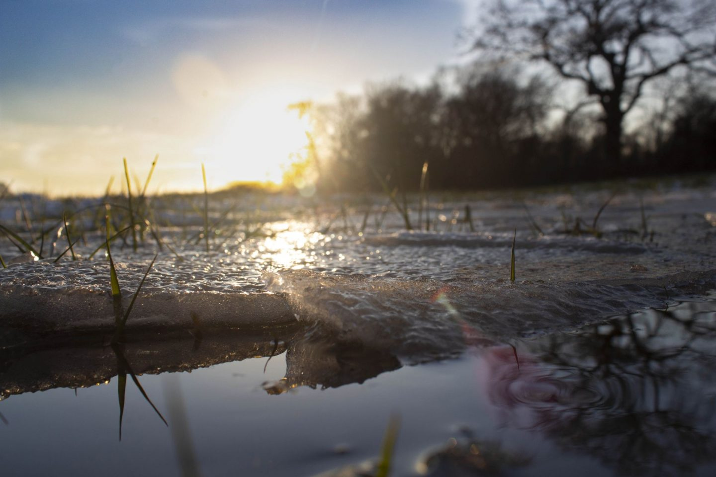 The great outdoors. Photograph of ice in a puddle
