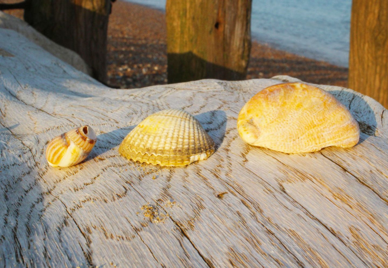 planning for summer, sea shells on groynes on a beach