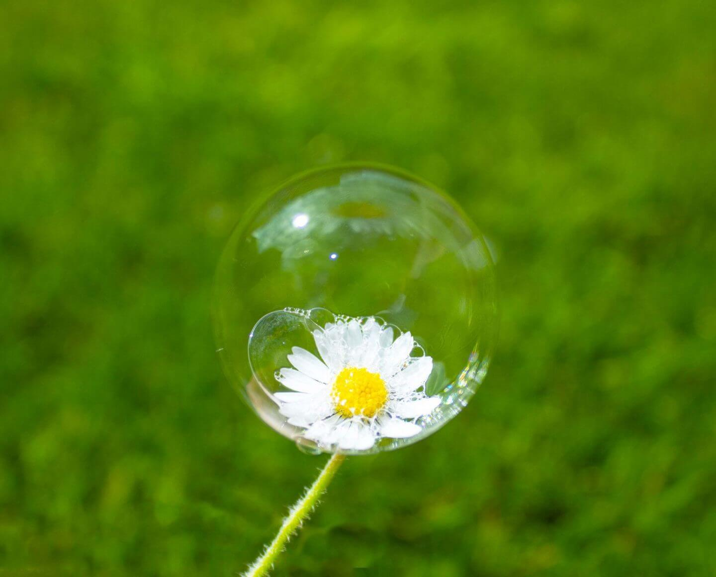 I'm forever blowing bubbles. Bubble on a daisy.